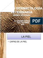 dermatologa-120520143701-phpapp02