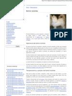 De perros_ bichón boloñés - Información de la raza