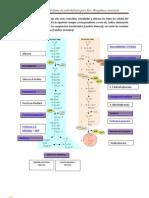 Soriam Practica de Metabolismo de Carbohidratos Para Foro