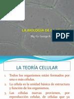 organeloscelulares-130708224437-phpapp02
