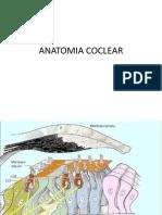 Anatomia Coclear