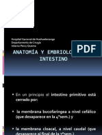 Anatomia y Embriologia Del Intestino