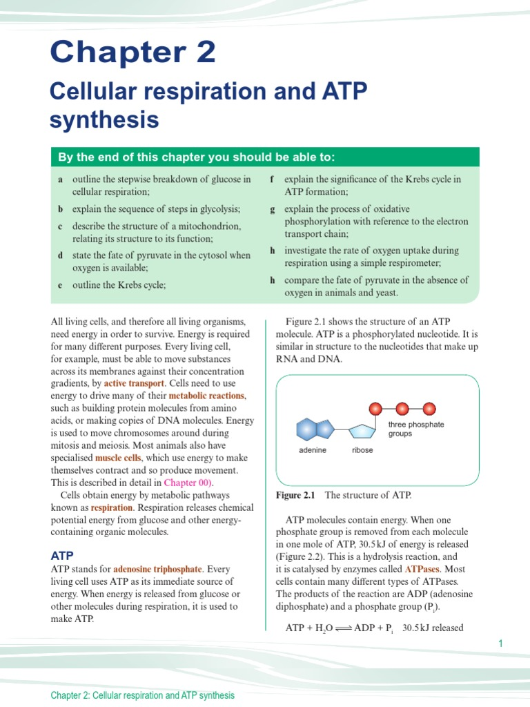 describe the structure of atp also Rna/dna structure and function are critical elements in so many fields of study including virology, medicine, forensic analysis, and genetics dna is the biological blueprint that makes you, you it codes for your hair color, eye color, how tall you can be, and how much you will weight.