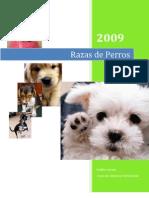 Clasificación Razas Caninas