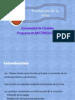 Formación de la Orina.pptx