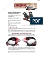 Java Sparrow Sexing