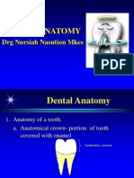 A06 Dental Anatomy