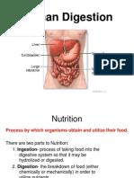 TheDigestiveSystem