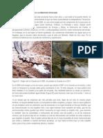 Artículo de Opinión_Plantas medicinales