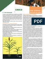 SorgoCrecimiento_y_desarrollo_del_cultivo.pdf