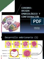 10- Ontogenia Del SN y Diencefalo (Cerebro)