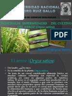 PRINCIPALES Enfermedades Del Arroz