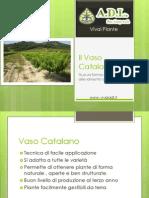 Forme di allevamento - Vaso Catalano - Diapositive