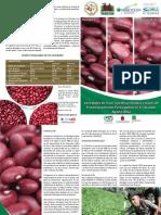 Brochure Variedades Frijol Fp 2012