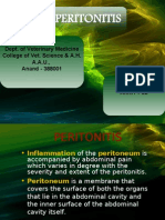 Peritonitis in animals