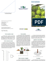 F-Cultivo Coqueiro Anao