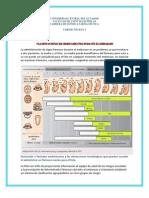 Clasificaciones de Medicamentos Durante El Embarazo