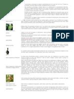 [E-Book - Enologia] Enciclopedia Del Vino (Con Immagini)