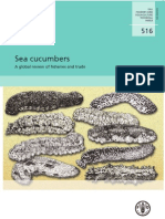 FAO 516 Sea Cucumbers