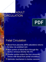 Fetal & Adult Circulation