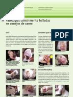 34_patologiasconejos_