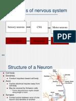 Excitabilidad en Neuronas (en Inglés, pero muy útil)