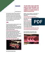 Anatomía y Fisiología de la Reproducción Bovina