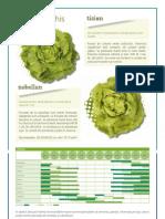 Salata, Tizian Nobellan Povoa Cerveira Shangore Centore Tribore Emerald Baglin