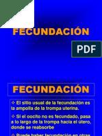 08 FECUNDACIÓN