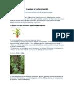 Plantas desintoxicantes