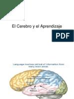 3 El Cerebro y El Aprendizaje