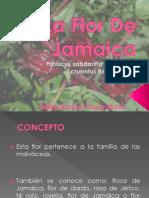 La Flor de Jamaica