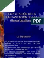 EXPLOTACIÓN DE LA PLANTANTACIÓN DE HULE (Hevea
