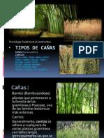 Tipos de Cañas bambu y carrizo1.2.pptx
