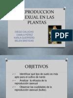 Reproduccion Asexual en Las Plantas