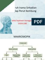 Pengaruh Irama Sirkadian terhadap Perut Kembung.pptx