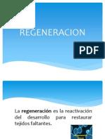 Burgos Patologia