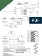 Acido Nucleico Mapa Bacan
