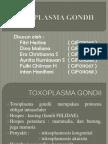 ppt TOXOPLASMA GONDII