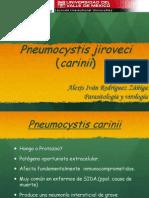 Pneumocystis Jiroveci Carinii