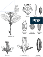 Erythroxylaceae