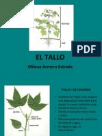 6. Tallo. Milena Armero Estrada