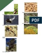 Flora y Fauna Aqp