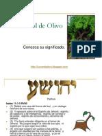 el-arbol-de-olivo-1221335183669111-9