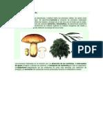 Clases Sobre Transporte de Nutrientes en Las Planatas