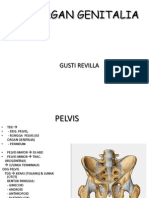 organ genitalia 010.ppt