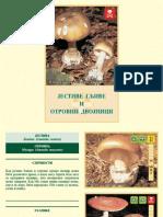 Jestive gljive i otrovni dvojnici