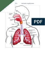 78733724-Toteanu-Cristina-Anatomia-corpului-uman-imagini[1].pdf