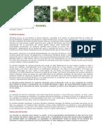 Jatropha y Bio-Diesel _2