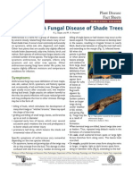 anthracnose-a fungal disease of shade trees